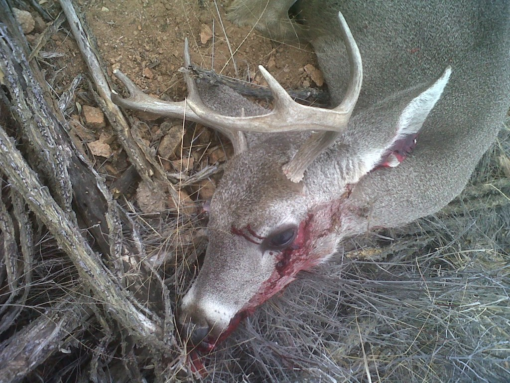 How To Hunt Coues Deer Just Another Wordpress Com Weblog